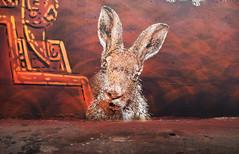 Rabbit (HBA_JIJO) Tags: streetart urban graffiti stencil paris animal art france artist hbajijo wall mur painting spray pochoiriste urbain adey lapin rabbit peintue
