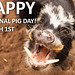 It's National Pig Day!