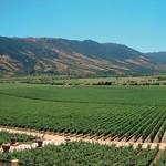 Weinbau bei Mendonza, Argentinien