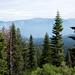 Florestas e mais florestas