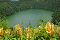 Ginger Lily en Las Azores. (Victoria.....a secas.) Tags: sanmiguel gingerlily islasazores lagosantiago