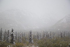 Fall / Autumn snow (Allyeska) Tags: autumn snow fall alaska pass august snowing 2015 tahneta