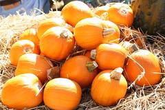 Autumn Gold (thmlamp) Tags: berlin germany pumpkin gourd squash krbis cushaw cucurbita autumngold baumschulenweg spthstrase traditionsfest traditionsfestspthschebaumschulen