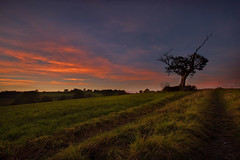 Fire in the Sky (Getty listed) (Alan10eden) Tags: autumn sunset orange tree field canon landscape evening glow colours view dusk path wideangle lane northernireland laneway 1022mm lonetree ulster markethill countyarmagh 70d alanhopps