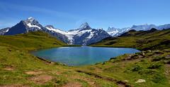 6049 Bachalpsee auf dem First bei Grindelwald (Schweiz) (Fotomouse) Tags: mountain lake berg landscape schweiz flickr outdoor swiss first berge grindelwald landschaft draussen bergwelt bachalpsee switzera fotomouse alpineworld