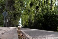 Entrando a Placilla, Colchagua (Ricardo Obando) Tags: ruta canon rboles camino carretera efs1855mm paisaje bosque 1855mm alameda asfalto airelibre colchagua lamos placilla colchaguavalley