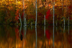 Autumn Daze (SunnyDazzled) Tags: statepark longexposure autumn trees lake reflection fall nature water golden newjersey scenery colorful bare branches foliage trunks flooded drowned deadtrees longpondironworks