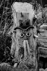 Stumpy (jeannie_isaacs) Tags: blackandwhite tree happy stumpy stump blackandwhitephotography blackandwhitenature