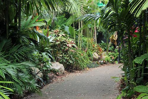 Entering the palm garden.
