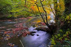 Plessey Woods (sidrog28) Tags: nikon d3200 shallow plesseywoods river autumn woods