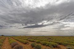 Lavendel im Herbst (Babaou) Tags: france frankreich paca dxo provence lavande 1022mm lavendel alpesdehauteprovence provencealpescôtedazur hauteprovence plateaudevalensole labatie2015