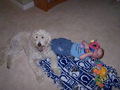 this-is-ginger-with-her-little-brother--ginger-is-one-of-lilly-and-tobys-girls-_2778018149_o