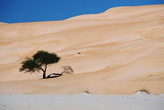 Mauritania (denismartin) Tags: tree sahara sand alone desert dunes lonely geology mauritania mauritanie warane canoneos500 chinguetti adrar ouarane denismartin الجمهوريةالإسلاميةالموريتانية argenticpics