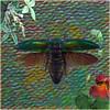 Jewel Beetle (Tedje51) Tags: hss manipulation digitalmanipulation beetlewingcovers greenelytron textured
