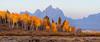 Sunrise In The Grove (Hank Christensen) Tags: usa natural sunrise grandtetonsnationalpark northamerica nature nationalpark mountains outdoor trees stock fallcolors outside grandtetons unitedstates aspen landscape wyoming