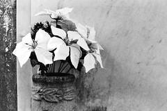 AA025 (Terry Christian Photo) Tags: nikon nikonf2 nikonf2photomic photomic kodak trix trix400 hc110 neworleans stlouiscemetery3 cemetery grave vault tomb ruin stone marble