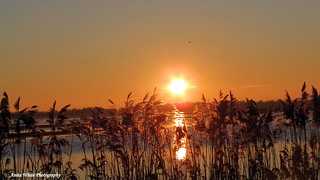 Frampton Marsh Sunset