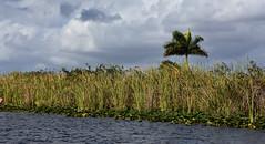 Florida Everglades (starbuck77) Tags: florida everglades nikon d7200