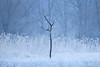 Alone (yoshy!) Tags: landscape nature outdoors minimalist intimate snow winter cold tree alone simplicity adventure exploration mood moody foggy misty fog mist switzerland frost