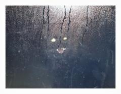 P1380064 (jimbonzo079) Tags: cat oropos attiki greece panasonic lumix dmc gf5 1442mm art view 2017 digital film effect texture vsco micro 43 night dark light color black flash window glass wet water animal house humidity photoshop lightroom portrait funny pet