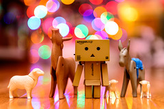 Day 365/366 December 30, 2016 (Wells Photos) Tags: project366 danbo danboard cardbo kiyohikoazuma yotsubakoiwai