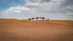 camels in the desert (laureannehannes) Tags: morocco camel camels camelride animal animals group sky clouds sand desert fez sahara africa travel travelphotography traveling nature adventure outdoor experience