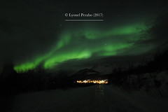 Northern_Lights_21_01_2017_VI (LyonelPerabo) Tags: aurora auroraborealis borealis light lights norge north norway northern northnorway nordic northernlight northernlights nord nordnorge arctic polar troms tromsø tromso green grey black night nighttime landscape nature sky skies cloud clouds cloudy winter ice icy snow snowy tree trees forest mountain mountains hill hills horizon lauklines tulleng kattfjord kvaløya kvaloya kvaløy kvaloy island islands coast sea coastal fjord dark darkness 2017 january