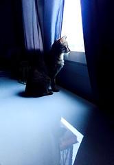 Regarder devant.. (fourmi_7) Tags: chat fenêtre intérieur avenir regarder animal compagnie gatto finestra guardare avvenire animale compagnia interno cat makes windows look future company inside