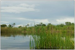 DSC08692PJ_XNV (http://phj.bookfoto.com/) Tags: botswana afrique okavango philippe jubeau delta