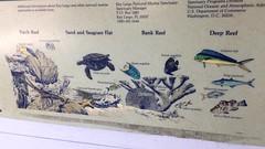 17. John Pennekamp fish (Misty Garrick) Tags: johnpennekamp johnpennekampreef johnpennekampcoralreefstatepark coralreef florida keylargofl keylargo floridakeys atlanticocean