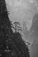 Huangshan (stuckinparadise) Tags: stuckinparadise huangshan anhui china karst mountain pine blackwhite monochrome guangmingding baiyun
