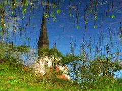 IMG_5108 Reflection upside down (Traud) Tags: deutschland germany bavaria bayern reflection spiegelung spiegelbild gedreht upsidedown teich pool