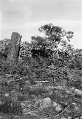 Tree on hillside (kleinbatavia) Tags: blackandwhite bw white plant black france tree window monochrome wall outdoor large epson format rodinal ardeche 5x7 fomapan v700 13x18