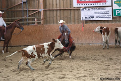 BJ1A9296 (yoann.coin) Tags: horse france western cutting equitation ncha remoray