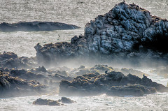 Organic Life (nosha) Tags: california ca blue seascape water beautiful beauty animal landscape coast wildlife shore lobos pointlobos