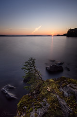 spruce cones (Taittunutta Valoa (Refraction of light)) Tags: sunrise finland cone tampere spruce pirkkala