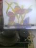 Empezando con la segunda mariposa (elartistadelamaquinadeescribir) Tags: dibujo mariposas diseño creatividad maquinadeescribir manualidad puntodecruz