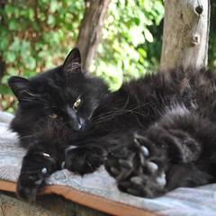 Sissi. (GiannLui) Tags: blackcat sissi gattonero