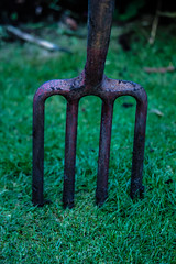 Fork Lift [12/31] (eskayfoto (aka Nomis.)) Tags: grass canon garden eos rebel october raw outdoor lawn fork pitchfork tool 1231 day12 pictureaday lightroom 2015 700d canon700d canoneos700d t5i canonrebelt5i october2015 rebelt5i october2015challenge sk201510121477raweditlr sk201510121477
