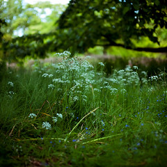 (bokehmaki) Tags: flowers england plants nature 50mm spring bokeh sigma nationaltrust nymans canon5dmkii