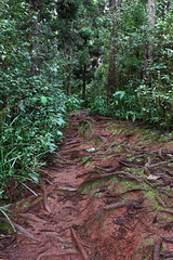 Track near Cascade du Maniquet - La Runion (xalub33) Tags: nature forest track ngc roots chemin fort racines cascadelemaniquet