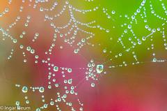 Spiderweb at autumn (Ingar H) Tags: autumn colors spider drops web dew høst edderkopp dugg dråper edderkoppnett