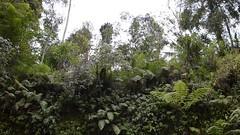 DSC_1328 (sootix) Tags: bali green temple ancient streams lush gunung pura kawi