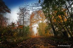 Der namenlose Wanderer (MSPhotography-Art) Tags: autumn landscape nebel herbst alb landschaft wandern burg hohenzollern burghohenzollern albstadt albtrauf schwbschealb schwbsche
