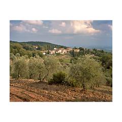 Honeymoon in Tuscany (I) (j1eke) Tags: trees light summer evening honeymoon large olive hills tuscany chianti 4x5 format cypress siena portra rolling 160 fonterutoli chamonix045n2