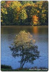 La Sablire - Le Palais sur Vienne (philippejubeau) Tags: jaune automne rouge couleurs rivire palais arbre philippe vienne haute feuille limousin sablire jubeau