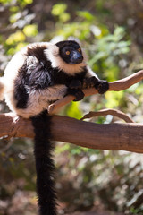 LEMUR-PARK-33 (RAFFI YOUREDJIAN PHOTOGRAPHY) Tags: park city travel trees plants baby white cute green animal fauna canon river jumping sweet turtle wildlife bricks mother adorable adventure explore lemur 5d lemurs bushes madagascar 70200 antananarivo mkiii