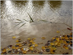 Hojas cadas. (margabel2010) Tags: naturaleza azul hojas agua arena amarillo otoo rama reflejos airelibre aguadulce aguafluvial