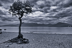 Lonesome Tree (s.gregory) Tags: tree water scotland blackwhite loch lochlomand