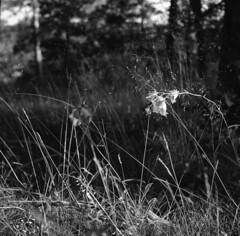 Sunny flower (A.Sundell) Tags: street urban bw 120 6x6 tlr film blackwhite superb kodak sweden tmax antique iso400 voigtlander streetphotography swedish retro d76 german 400 uppsala epson sverige v600 tmax400 vignetting 1934 voigtländer twinlensreflex westgermany antik skopar f35 svartvit 75mm fixer homedeveloped uppland anastigmat 75cm uppsalalän voiglaender tmaxfix voigtländersuperb voigtlängder